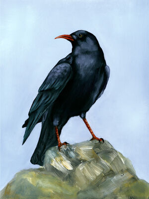 Chough