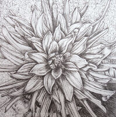 black and white flowers drawings. B/W Dahlia Flower 2
